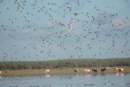 Aves alzan el vuelo en el entorno de Doñana.