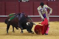 Trincherazo de Cayetano al tercer toro de Cuvillo, este sábado en La Malagueta.