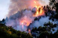 GRAF7596. LAS <HIT>PALMAS</HIT> DE GRAN CANARIA.- Un dispositivo de emergencia trabaja en la extinción de un incendio en el municipio de grancanario de Valleseco, el tercero importante que se ha declarado en la isla en los últimos ocho días y cuando aún los otros dos no se han dado por extinguidos. A primeras horas de esta tarde comenzó el fuego en el barranco de Los Pajaritos, entre Cueva Corcho y Crespo. La isla de Gran Canaria está en alerta naranja por temperaturas de hasta 37 grados. Angel Medina