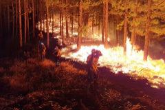 El fuego entra en el Parque  de Tamadaba tras devastar más de 1.500 hectáreas