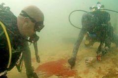 Buceadores descubrieron un tapete de cianobacterias junto a una pradera de posidonia.