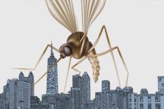 Ya están aquí: la amenaza de los virus exóticos llega a España