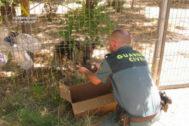 Momento en que un guardia civil enseña los cachorros a la madre.