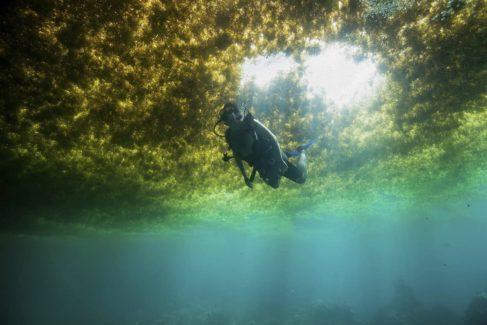 Un submarinista bucea bajo las algas en Puerto Morelos (Méxco).