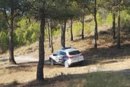 Polícia Local de Getafe en el parque donde se encontraron los milanos muertos