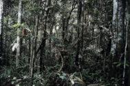 Efectos del cambio climático en el Amazonas.