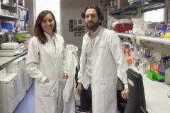 Alejo Efeyan, jefe del Grupo de Metabolismo y Señalización Celular del CNIO, y Ana Ortega-Molina, primera autora del estudio.