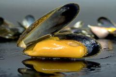 Los secretos del 'bouchot',  minúsculo y delicioso mejillón francés