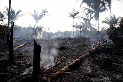 El incendio del Amazonas: una cronología visual de la agonía tropical