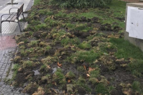 Parque de Majadahonda con la hierba levantada por jabalíes