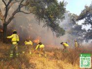 Técnicos del Infoca, sofocando las llamas del incendio de Almonaster.