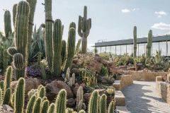 En el jardín de Desert City viven más de 400 cactus y otras plantas xerofíticas.