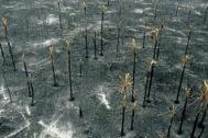 Aérea de la destrucción de los incendios que avanzan sin control por el Amazonas, en este caso, sobre la región de Pantanal, en la frontera entre Brasil y Bolivia.