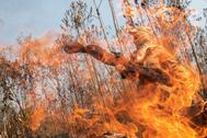 Un bombero tras las llamas en la selva amazónica, cerca de Porto Velho (Brasil).