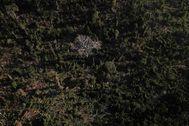 Vista aérea de una zona de la selva del Amazonas antes de ser quemada para pastos