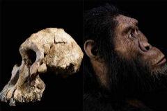 El cráneo que ha puesto cara a  'Australopithecus anamensis'