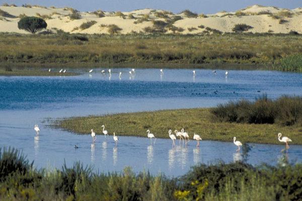 Doñana cumple cincuenta años como parque nacional y la Junta prepara un programa para potenciar su imagen