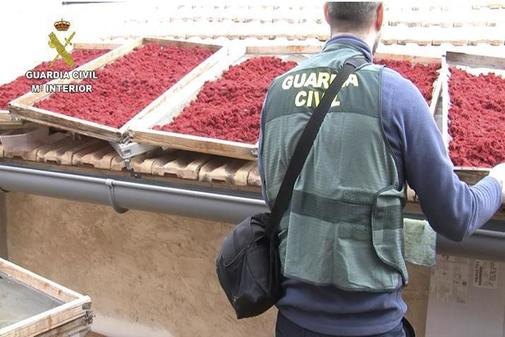 Operación de la Guardia Civil contra falsos productos bio
