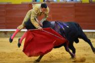 Paco Ureña es cogido por el segundo toro de Bañuelos, este viernes, en Palencia.
