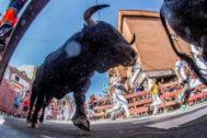 Un toro en el último encierro de Sanse, este domingo.