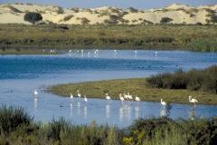Aves en los humedales del parque de Doñana.