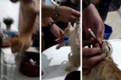 Unos jóvenes maltratan a un gatito introduciéndole un cigarrillo encendido en la boca
