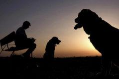 Zamora cobrará nueve euros por cada perro censado en la ciudad
