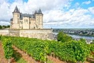 Cepas junto al castillo de Saumur, original del siglo X.