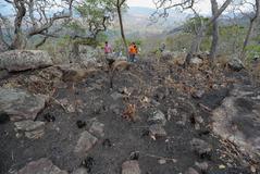 Orquídeas quemadas en la comunidad El Carmen (Bolivia), muy dependiente del ecoturismo.