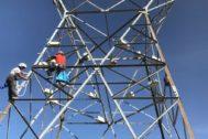 Operarios colocan nidos en la estructura de una torre de distribución eléctrica.