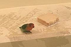 """La policía holandesa detiene a un pájaro, le ofrece un sándwich y """"oculta"""" su identidad"""