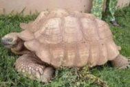 Alagba ('El anciano'), la más vieja de África.