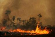 Un incendio calcina una parte de la selva del Amazonas.