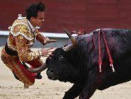 -FOTODELDIA- GRAF9327. MADRID.- El diestro Gonzalo <HIT>Caballero</HIT> sufre una cogida en el tradicional festejo del Día de la Hispanidad, con toros de la ganadería de Valdefresno, y con el que, además, se cierra la temporada 2019 en la primera plaza del <HIT>mundo</HIT>.