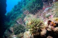 Un arrecife bajo aguas de las Columbretes.
