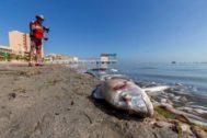 Miles de peces y crustáceos han aparecido muertos en el Mar Menor.