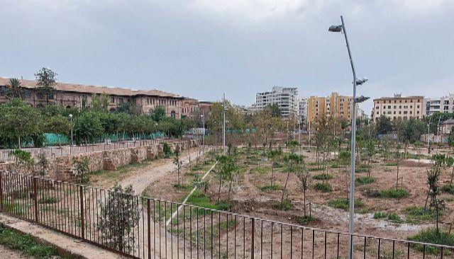Estado actual del denominado bosque urbano de Sa Riera en Palma.