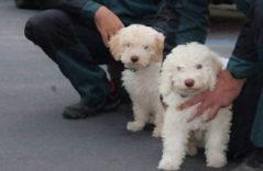 Los sobrinos de Marley, el perro que resolvió algunos de los peores crímenes
