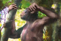 El simio que vivía en los árboles pero era capaz de caminar como los humanos