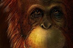 Recreación artística de 'Gigantopithecus blacki'
