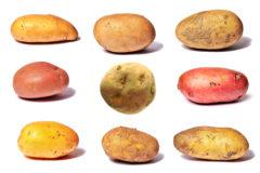 Todo lo que hay saber de las patatas más allá de la tortilla y las bravas