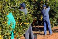'Collidos' de naranja en la campaña pasada.