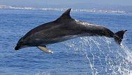 A los delfines no les gusta el ruido