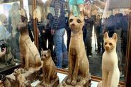 Vitrinas con dos momias de cachorros de león en Saqqara.