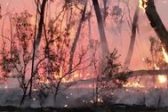 Fuegos como este han matado a 2.000 koalas en Australia.