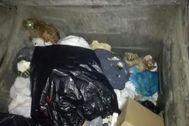 Algunos de los perros encontrados en el contenedor