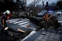 Varios bomberos trabajan en la retirada de un árbol caído a causa del viento en San Sebastián.
