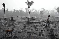 Un hombre camina con su perro por una zona quemada de la Amazonía.