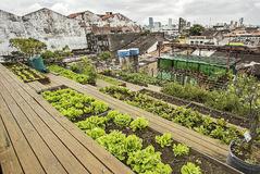 Plantaciones en los tejados de Recife (Brasil).