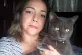 Pixi, el gato poliamoroso al que pillaron llevando una doble vida